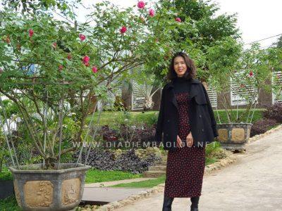 Quán có rất nhiều hoa hồng, đặc biệt là hồng cổ, hồng thân gỗ