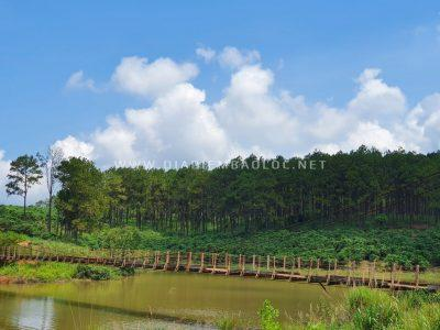 Từ đập chạy thêm một chút sẽ thấy một cây cầu gỗ và một rừng thông nhỏ