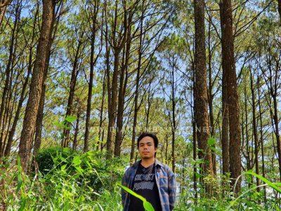 Rừng thông hồ Cai Bảng
