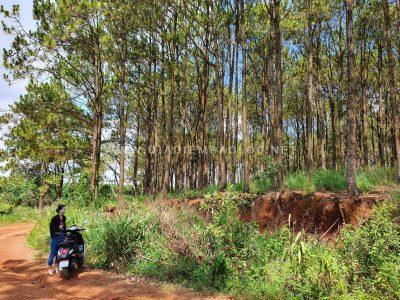 rung thong baoloc (2)