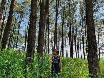 rung thong baoloc (4)