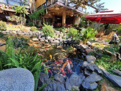 Hồ cá Koi tại quán