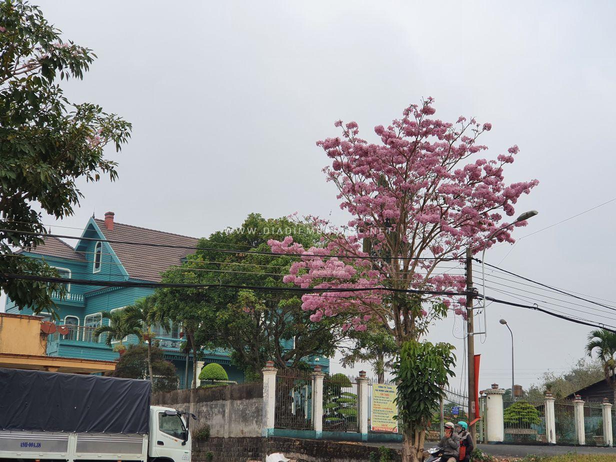 hoa hong phan bao loc 2