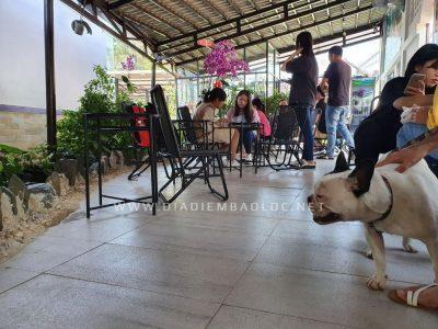 cafe cho meo bao loc (3)